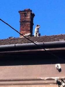 10372006_677679422268698_6532504849784421052_n Up on the roof! Up on the roof! 10372006 677679422268698 6532504849784421052 n
