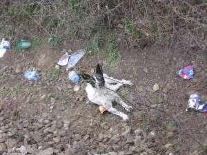 1.1. s.o.s. dog hit by train <h3>S.O.S. Dog hit by train</h3> 1