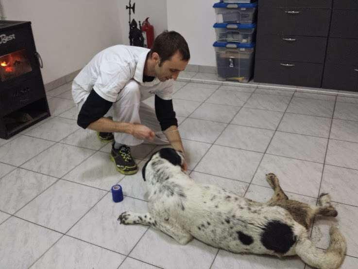 1.clinica s.o.s. dog hit by train <h3>S.O.S. Dog hit by train</h3> 1