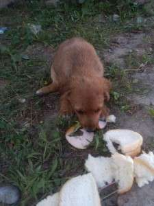 Puppies who were abandoned and beaten puppies who were abandoned and beaten Puppies who were abandoned and beaten 4