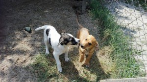 4 puppies who were abandoned and beaten Puppies who were abandoned and beaten 4