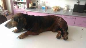 SOS! A dog lies full of wounds! sos! a dog lies full of wounds! SOS! A dog lies full of wounds! 1