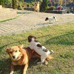 love&hope Love&Hope FB IMG 1540827022155