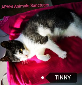 tinny, saved from death! Tinny, saved from death! IMG 20181211 200203