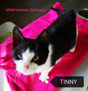 tinny, saved from death! Tinny, saved from death! IMG 20181211 200756